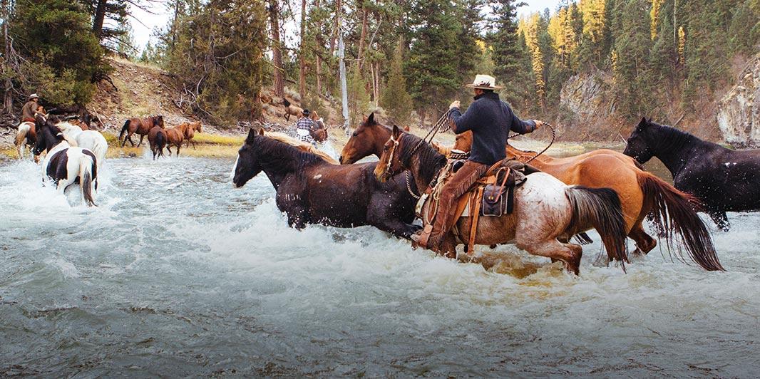 Montana Equestrian.