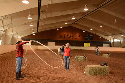 Saddle Club Arena