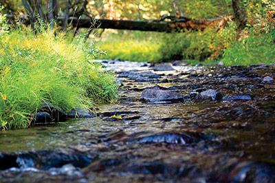 The Morris Ranch House - Elk Creek